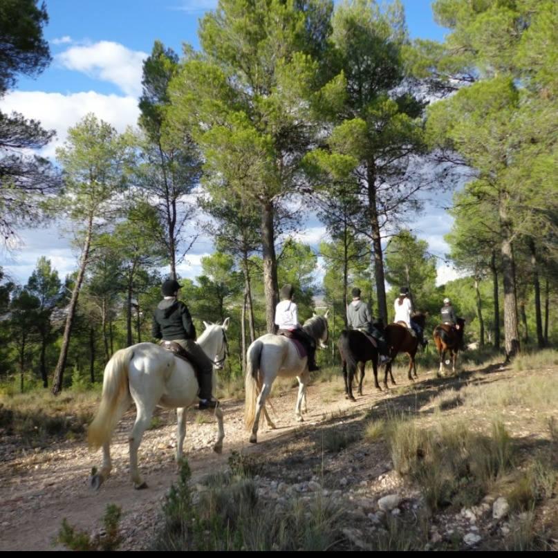 rutas a caballo guiadas y mas